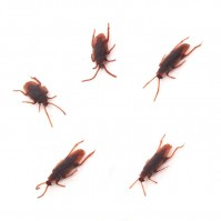 Set of 5 Joke Cockroaches Novelty Prank Life Like Plastic Toy Trick Bug Funny Halloween April Fools Wind Up