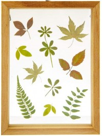 Herbarium Pressed Flowers Wooden Photo Frame Art Photo Picture Portrait